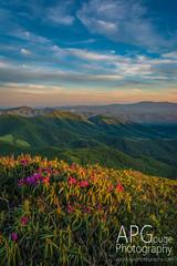Clouds and the Valley (APGougePhotography) Tags: sunset mountain mountains clouds golden nikon shadows north northcarolina valley carolina vista roan d800 nikond800 cloudsstormssunsetssunrises