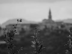 The City of Buzet, Croatia (Daniel C. Brunner) Tags: bnw blackandwhite bw blackwhite bokeh buzet croatia 2016 mono monochrom lumix lumixg mft microfourthirds holiday arounttheworld noiretblanc schwarzweis