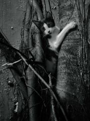 Tight Squeeze (TheHouseKeeper) Tags: pet tree monochrome animal cat mammal blackwhite kitten feline branch pussy roots grip mateo pussycat thehousekeeper georgemateo