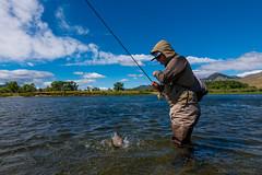 Trout Wrassler (john.c.arnold) Tags: patagonia montana release jim landing miller flyfishing hatch trout missouririver simms browndrake