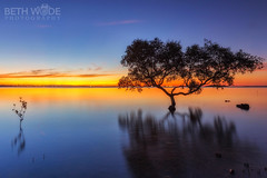From Little Things Big Things Grow (Beth Wode Photography) Tags: blue trees sunset orange silhouette twilight dusk beth mangroves redlands wellingtonpoint wode bethwode
