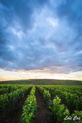 Le soir venu / In the evening (Loïc Cas) Tags: landscape vignes vineyards france côtedor canon 6d wideangle grandangle 1740mm evening soir sunset coucherdesoleil