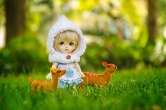 Little White Riding Hood (Alix Real) Tags: bjd abjd abjds bjds asian ball jointed doll dolls super dollfie lati latidoll yellow latiyellow noa hood pixie cape godolls handmade deer fawn bokeh tiny pukifee pkf mueca resin resina