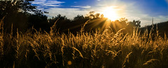amber waves (RB Quattro) Tags: nature sunset sky fields lensflare summer landscape nikon