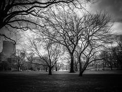 Boston Common (Marcel Weichert) Tags: boston bostoncommon park path tree usa massachusetts unitedstates us
