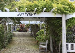 Welcome (~~J) Tags: bench roses garden welcome green pink brick wisteria benches stateofwashington