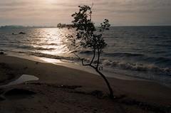 Ilha da Magia (luluferrari) Tags: film 35mm beach sunset sunny sunshine florianpolis ilhadamagia praia brasil brazil nikon nikonfm10 fm10 kodak kodak400 sea mar ocean wild nature natureza intothewild walkonthebeach survival survivor