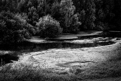 (Nico_1962) Tags: trees bomen nederland overijssel leica m8 summicron rangefinder bw zwartwit leicam summicron50mm primelens manualfocus
