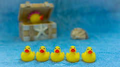 #Ducks #Ducks and #Ducks (graser.robert) Tags: ducks blue yellow ente qietsche quietscheente blau kiste muschel bad badeente tiefenschrfe bokeh