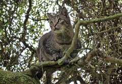 Jonas (ute_hartmann) Tags: jonas kater katze cat baum