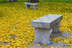 Quiet Times- November 14, 2014 (zachary.locks) Tags: park fall colors leaves stone bench alone sitting lawn full pile fallen quiettimes cy365 zlocks