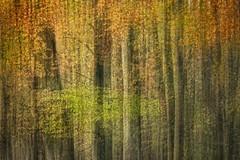 True colors... (Marijke M2011) Tags: wood autumn trees netherlands amsterdam movement bomen herfst bos amsterdamsebos mooywerk