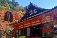 DSCF0100 (jess chau) Tags: autumn japan   nara   xm1 1650mm