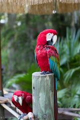 """Parrots • <a style=""""font-size:0.8em;"""" href=""""http://www.flickr.com/photos/92159645@N05/15615143633/"""" target=""""_blank"""">View on Flickr</a>"""