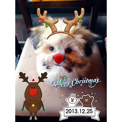 JingleBell#JingleBell#MarryXMas#to#everyone#wish u happy on X