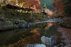 Red leaves of Kiyotaki, Kyoto /  (Kaoru Honda) Tags: autumn nature japan landscape nikon kyoto        redleaves     hodukyo   kiyotaki  d7000