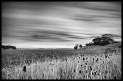 China Camp State Park; Marshlands and SF Bay beyond (mgriggy2012) Tags: park longexposure blackandwhite bw clouds state marin le wetlands sanfranciscobay marsh oaks sanrafael marshland chinacamp