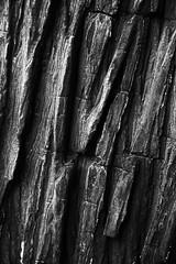 (Andy Gagne) Tags: blackandwhite bw canada tree nature canon britishcolumbia bark select
