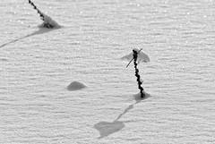Winterzeit / wintertime (vb-bildermacher) Tags: schnee winter cold ice nature frost jahreszeit natur skulptur wintertime kalt eis schatten herz liebe spiel winterzeit klte weis schattenspiel eisskulptur schattenwurf eiszeit leidenschaft kaltejahreszeit nordwinter