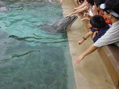 Friendly (Atila Yumusakkaya) Tags: usa orlando florida seaworld dolphine yumusakkaya