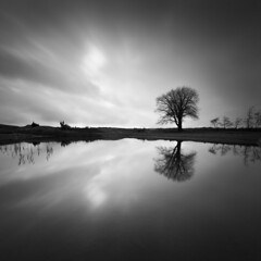 Reflected tree (- David Olsson -) Tags: longexposure november sunset blackandwhite bw lake seascape tree nature water monochrome clouds reflections square landscape mono nikon sundown cloudy sweden outdoor 11 karlstad le mirrored grayscale fx grad squarecrop vr vänern lonelytree d800 värmland 2014 1635 svartvit ndfilter blackglass svartvitt 1635mm gnd smoothwater skutberget lonesometree leefilters lenr bigstopper davidolsson 06hard 1635vr