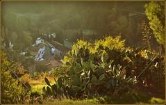 ,      (jose luis naussa ( + 1,6 k w. )) Tags: naturaleza nature beautiful wonderful rayosdesol espaagranada  saariysqualitypictures finegroup