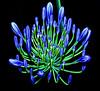 Sapphire' chandelier (shumpei_sano_exp1) Tags: blue golddragon platinumphoto aplusphoto ysplix theunforgettablepictures goldstaraward awesomeblossoms