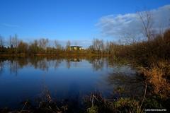 Across the pond (JSB PHOTOGRAPHS) Tags: sky clouds pond bluesky eugeneoregon acrossthepond altonbakerpark autzenstadium jsb1888