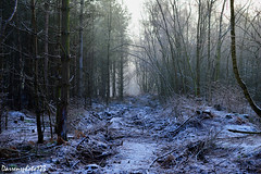Cold Woods (darrensphoto123) Tags: uk trees snow cold ice forest landscape lost sticks woods frost scene freeze twigs
