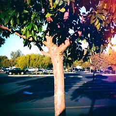 Tree. (John Holzer) Tags: deltaco