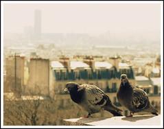 Pigeons at Sacre Coeur, Montparnasse lurking, Paris, France (Wagsy Wheeler) Tags: paris france building bird birds architecture haze pigeon pigeons horizon montparnasse tourmontparnasse montparnassetower sacrcur