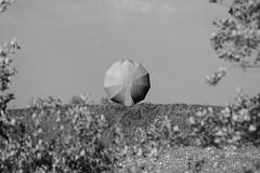 (Sean Anderson Classic Photography) Tags: sony sigma uc 70210 haarlemmermeer a700 f456 sigmazoom sonya700 sigma70210f456uc