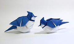 Blue Jays (Friedman Origami) Tags: blue bird art watercolor paper golden design origami acrylic jay fold