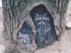 2015-11-10 07.26.25 1 (anastasiya_klenyaeva) Tags: trees sky nature russia autmn     saratov vsco vscocam vscorussia vscosaratov