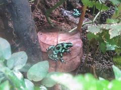 "Santa Elena: les étangs à grenouilles <a style=""margin-left:10px; font-size:0.8em;"" href=""http://www.flickr.com/photos/127723101@N04/26902125502/"" target=""_blank"">@flickr</a>"