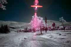 crosstree. (jrseikaly) Tags: pink sky lebanon sun tree nature landscape jack photography infrared arz cedars seikaly