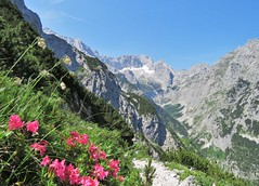 Hllental , Garmisch Partenkirchen , Germany (adr.vesa) Tags: flowers panorama green nature bayern bavaria valley garmischpartenkirchen zugspitze hllental