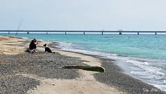 ... (danars) Tags: mare toscana spiaggia vada caneepadrone