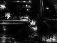 (Funda _) Tags: windows streets window animal cat dark kitten nightshot streetphotography katze kedi streetshot