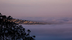 Promising Start to the Day (San Francisco Gal) Tags: sanfrancisco morning sky sunlight house tree fog hill marinelayer