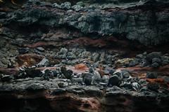 ES8A2109 (repponen) Tags: ocean nature island hawaii rocks maui blowhole monuments nakalele canon5dmarkiii