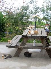 IMG_1760 (Chat Malicieux) Tags: cats table siesta tisch katzen ktzchen