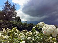 Coming up a storm (Tobi_2008) Tags: flowers trees sky germany deutschland saxony himmel wolken blumen ciel sachsen bume allemagne gewitter regen germania sturm unwetter