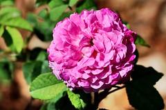 Maig_1125 (Joanbrebo) Tags: barcelona park flowers parque flores fleur blossom blumen fiori parc flors autofocus parccervantes efs18135mmf3556is canoneos70d