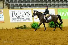 160505_D600_3677.jpg (shirley319) Tags: horse unitedstates lexington kentucky may nationals equestrian 2016 d600 horsecompetition ihsa kentuckyhorsepark