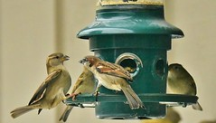 Getting a little crowded... (stevelamb007) Tags: nature birds illinois nikon wildlife birdfeeder lakecounty crowded stevelamb d7200