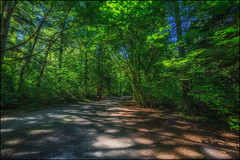 A Cool Walk on a Hot Day (Martin Smith - Having the Time of my Life) Tags: crescentpark surrey southsurrey path lightandshadows shade shadows forest samyang14mm28 nikond750 martinsmith martinsmith maples britishcolumbia canada ca