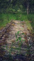 Nature Claims (Mark.L.Sutherland) Tags: old wood walkway bridge natureclaims mothernature grass green nettles stingers scotland rural highlands north uk unitedkingdom overg overgrown abandoned decaying sutherland samsung smartphone androidography galaxys5 phoneography cellphone cameraphone moss forest ruined scottishcountryside untouched