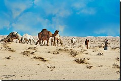 DUNES & CAMELS HEARD---Explored Aug 7,2016 #221 (jawadn_99) Tags: explore picnik supershot scout poster photography photographer kuwait interestingness flickr favorite blue art abigfave bedouin desert camel white ship textile designe animal profile kuwaitartphoto kuwaitart kuwaitphoto artphoto aplusphoto platinumheartaward anawesomeshot impressedbeauty superbmasterpiece the perfect naturesfinest superaplus blueribbonwinner diamondclassphotographer flickrdiamond goldenmix golddragon face portrait macro beautiful funny cute mygearandme magicunicornverybest blinkagain dunes heard sabbeya