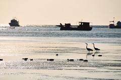 Sunbath (Marta Marcato) Tags: croatia croazia mare sea seaside spiaggia silhouette black contrast sun nero contrasto sole nikond7200 nature boat natura barche